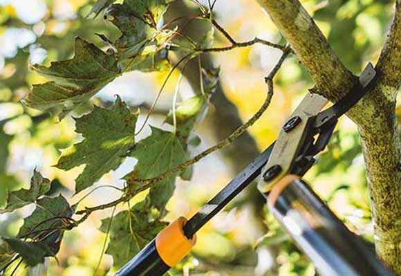Tree Trimming & Pruning Services