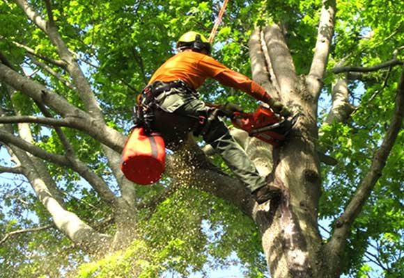 Emergency Tree Services outback