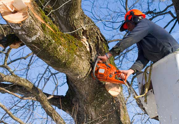 Tree Trimming & Pruning Services Sydney wide